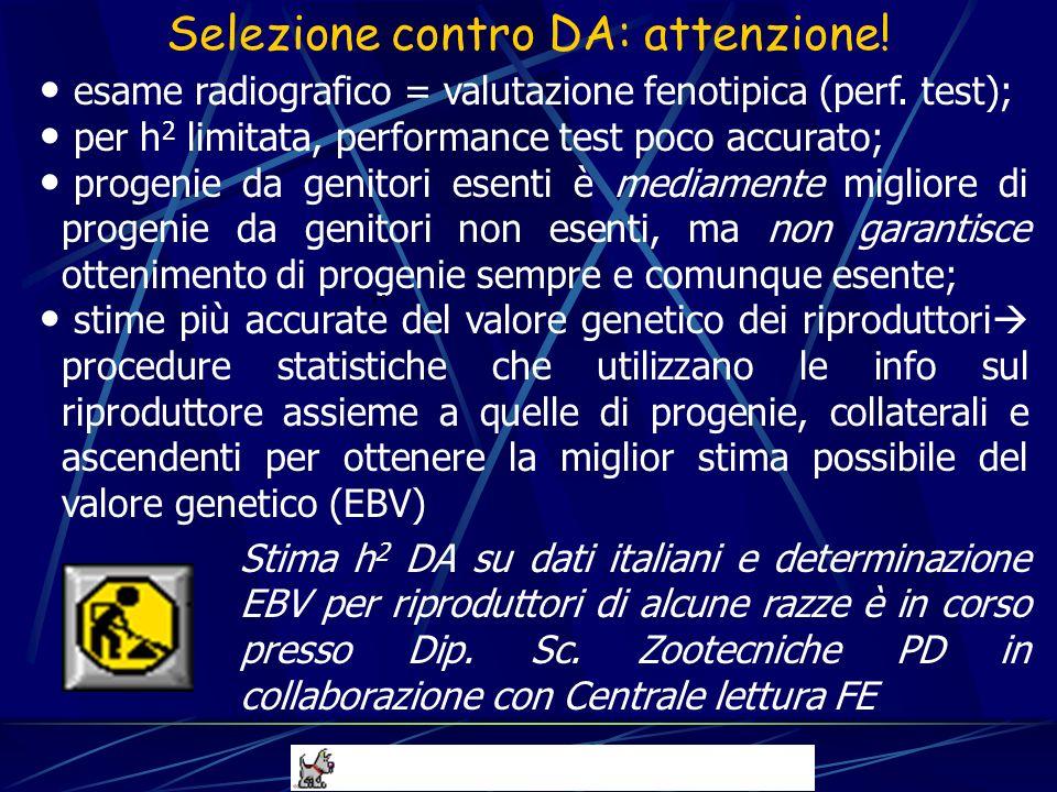 esame radiografico = valutazione fenotipica (perf. test); per h 2 limitata, performance test poco accurato; progenie da genitori esenti è mediamente m