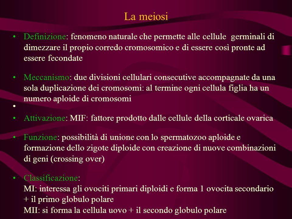 Le varie fasi del processo meiotico: Ia divisione meiotica (1) PROFASE I leptotene: i cromosomi appaiono come filamenti distinti in numero diploide zigotene: appaiamento dei cromosomi omologhi, indispensabile per il crossing-over pachitene: crossing-over tra segmenti di cromosomi omologhi.