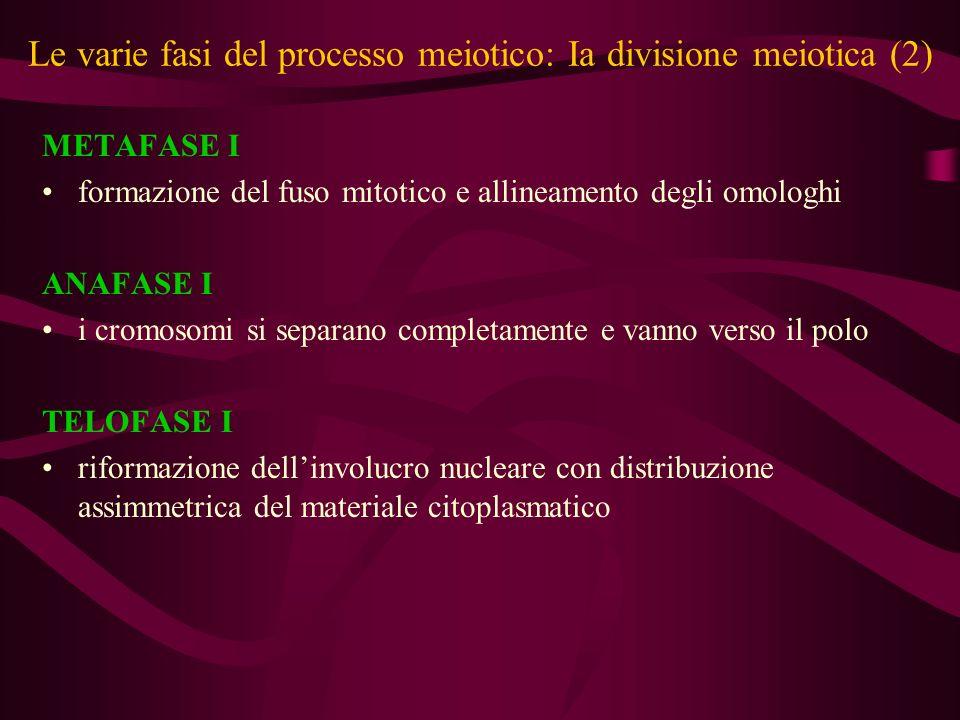 Le varie fasi del processo meiotico: IIa divisione meiotica viene completata ad ogni ovulazione conferendo allovocita la possibilità di essere fecondato PROFASE II in risposta al picco pre-ovulatorio delle gonadotropine, lattività nucleare riprrende: l ovocita completa la prima divisione meiotica ed elimina il primo globulo polare: lovocita ora detto secondario inizia la seconda divisione meiotica ma si arresta in MII METAFASE II si forma il fuso e scompare linvolucro nucleare.
