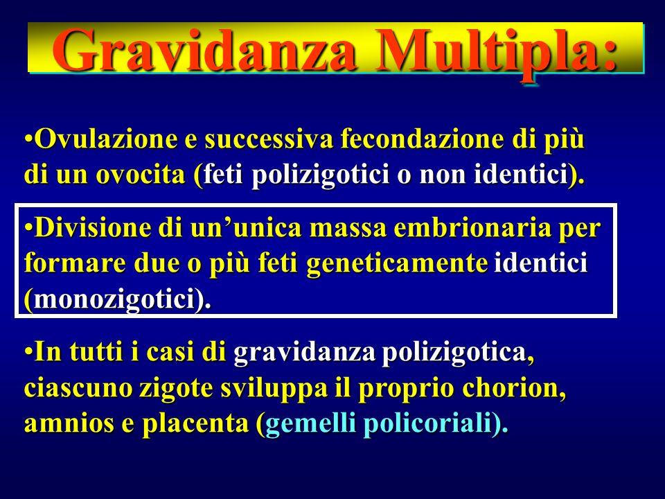 Gravidanza Multipla: Ovulazione e successiva fecondazione di più di un ovocita (feti polizigotici o non identici).Ovulazione e successiva fecondazione