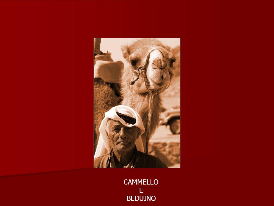 CAMMELLO E BEDUINO