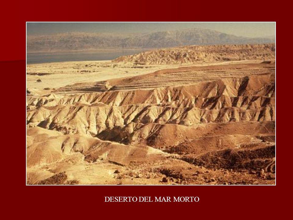 DESERTO DEL MAR MORTO