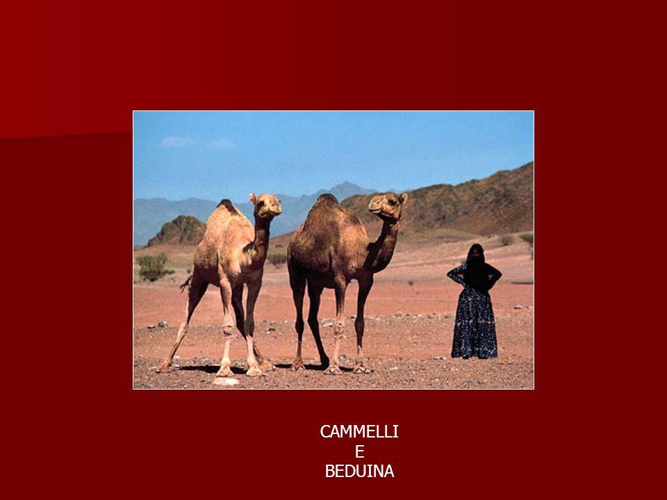 CAMMELLI E BEDUINA