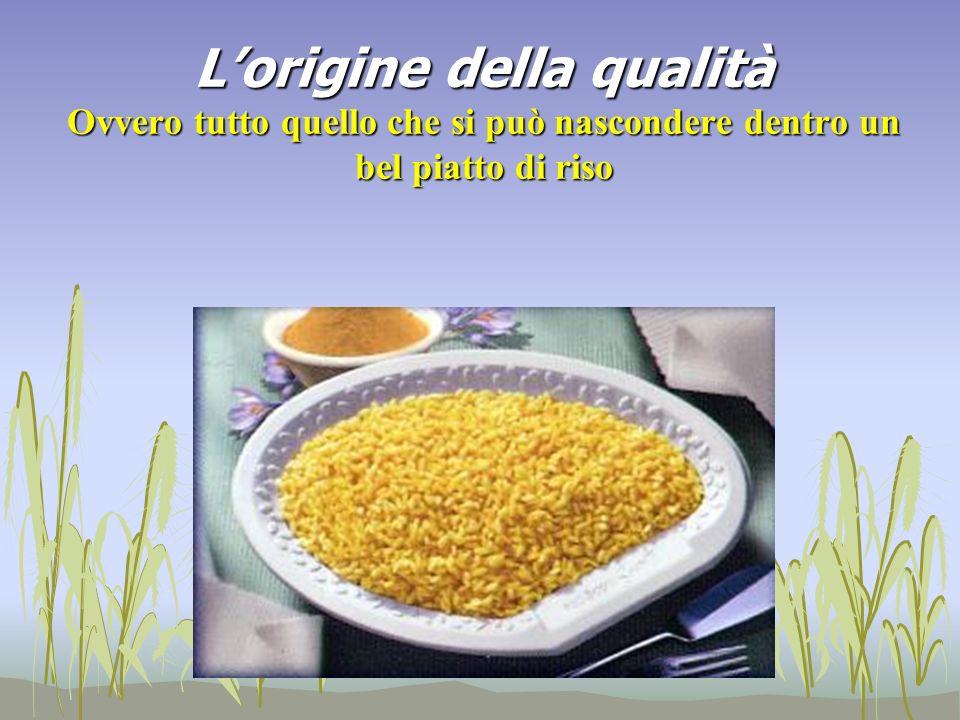 Lorigine della qualità Ovvero tutto quello che si può nascondere dentro un bel piatto di riso