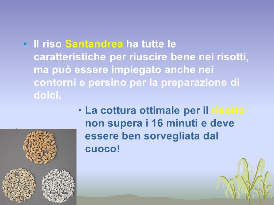 Il riso Santandrea ha tutte le caratteristiche per riuscire bene nei risotti, ma può essere impiegato anche nei contorni e persino per la preparazione