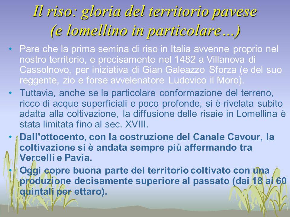 Il riso: gloria del territorio pavese (e lomellino in particolare…) Pare che la prima semina di riso in Italia avvenne proprio nel nostro territorio,