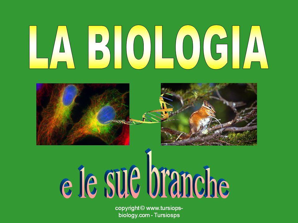 copyright © www.tursiops- biology.com - Tursiosps