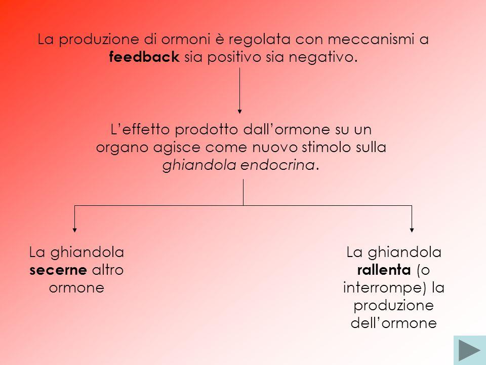 La produzione di ormoni è regolata con meccanismi a feedback sia positivo sia negativo. Leffetto prodotto dallormone su un organo agisce come nuovo st