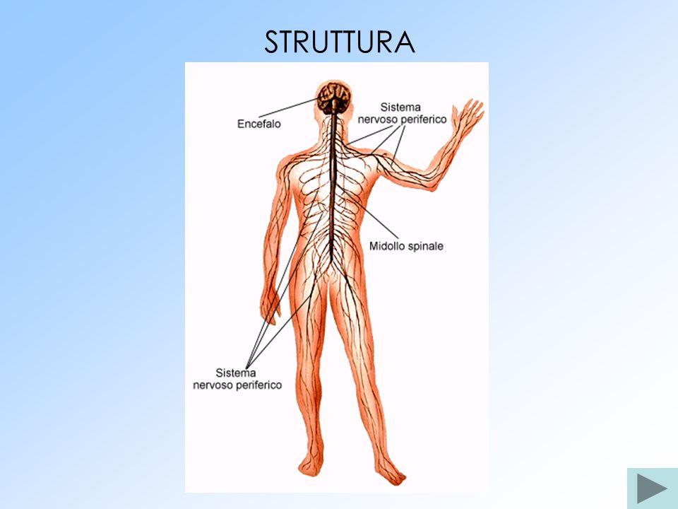 STRUTTURA