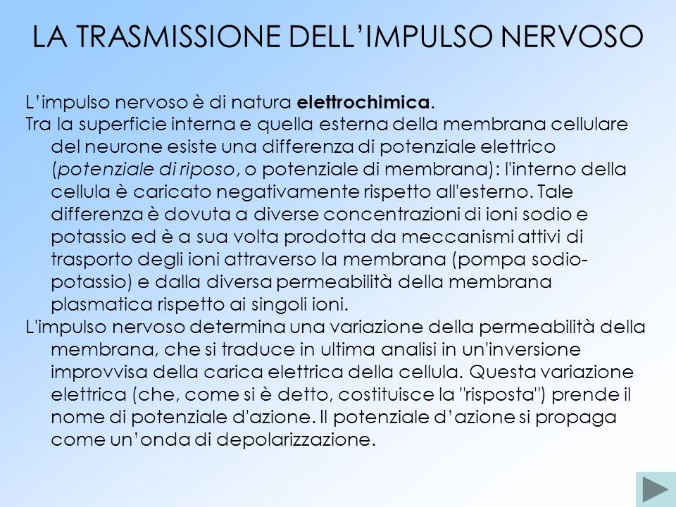 LA TRASMISSIONE DELLIMPULSO NERVOSO Limpulso nervoso è di natura elettrochimica. Tra la superficie interna e quella esterna della membrana cellulare d