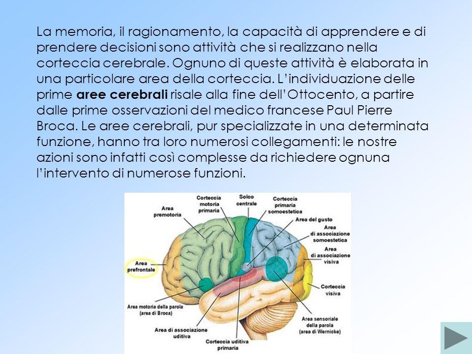 La memoria, il ragionamento, la capacità di apprendere e di prendere decisioni sono attività che si realizzano nella corteccia cerebrale. Ognuno di qu