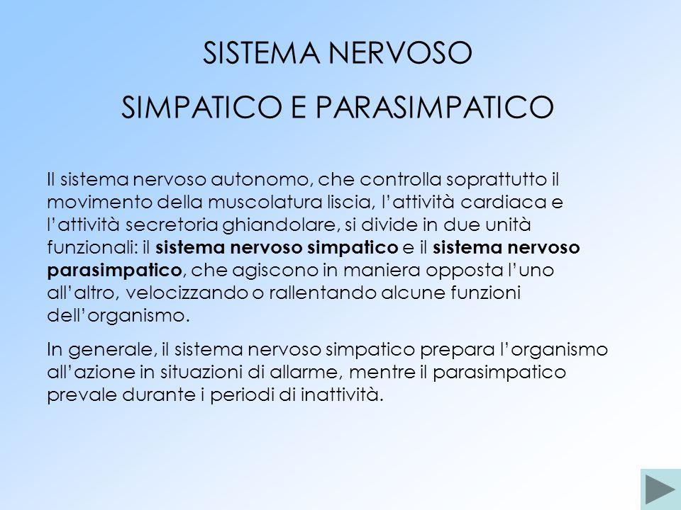 SISTEMA NERVOSO SIMPATICO E PARASIMPATICO Il sistema nervoso autonomo, che controlla soprattutto il movimento della muscolatura liscia, lattività card