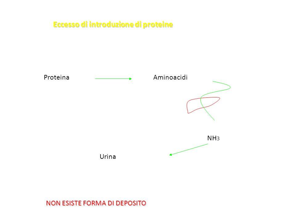 AminoacidiProteina NH 3 Urina Eccesso di introduzione di proteine NON ESISTE FORMA DI DEPOSITO