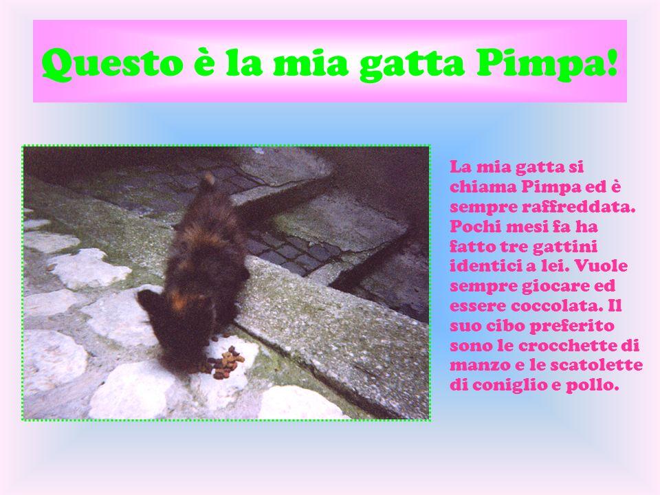 Questo è la mia gatta Pimpa! La mia gatta si chiama Pimpa ed è sempre raffreddata. Pochi mesi fa ha fatto tre gattini identici a lei. Vuole sempre gio