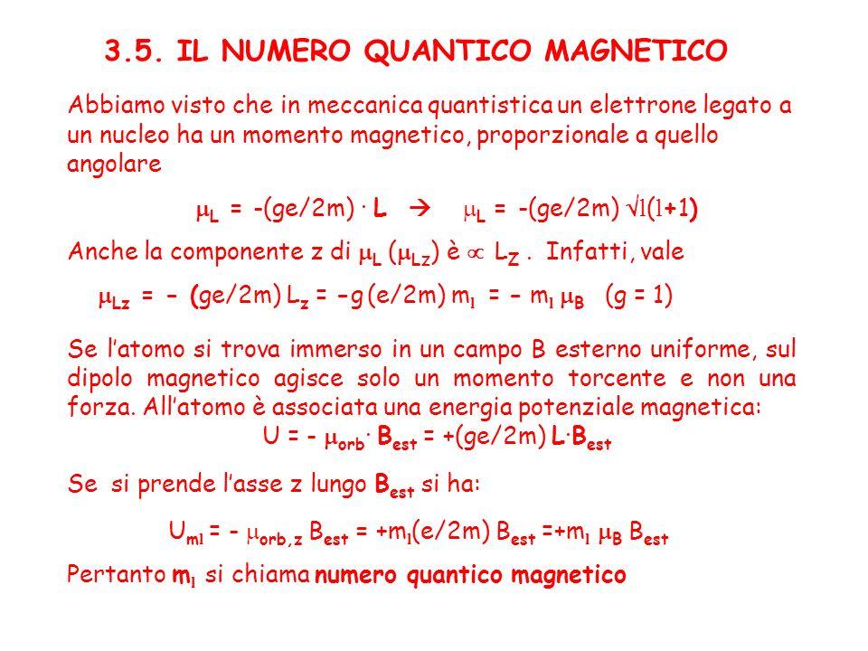 3.5. IL NUMERO QUANTICO MAGNETICO Abbiamo visto che in meccanica quantistica un elettrone legato a un nucleo ha un momento magnetico, proporzionale a