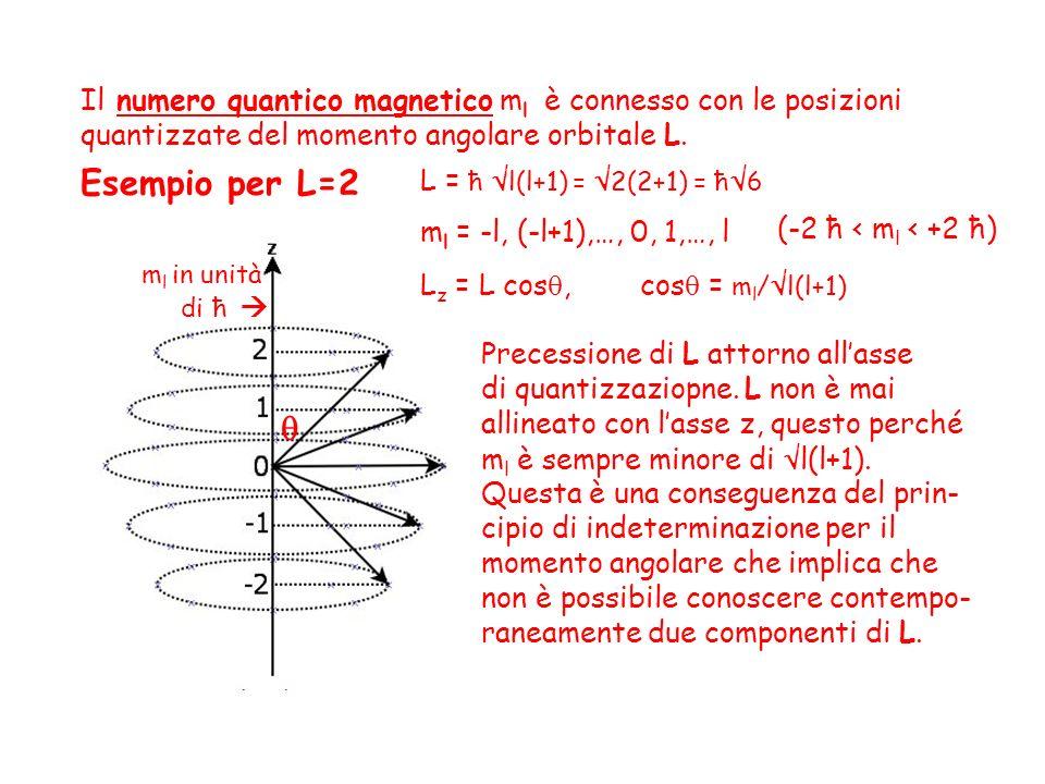 Esempio per l = 2. Il numero quantico magnetico m l è connesso con le posizioni quantizzate del momento angolare orbitale L. (-2 ħ < m l < +2 ħ) Prece