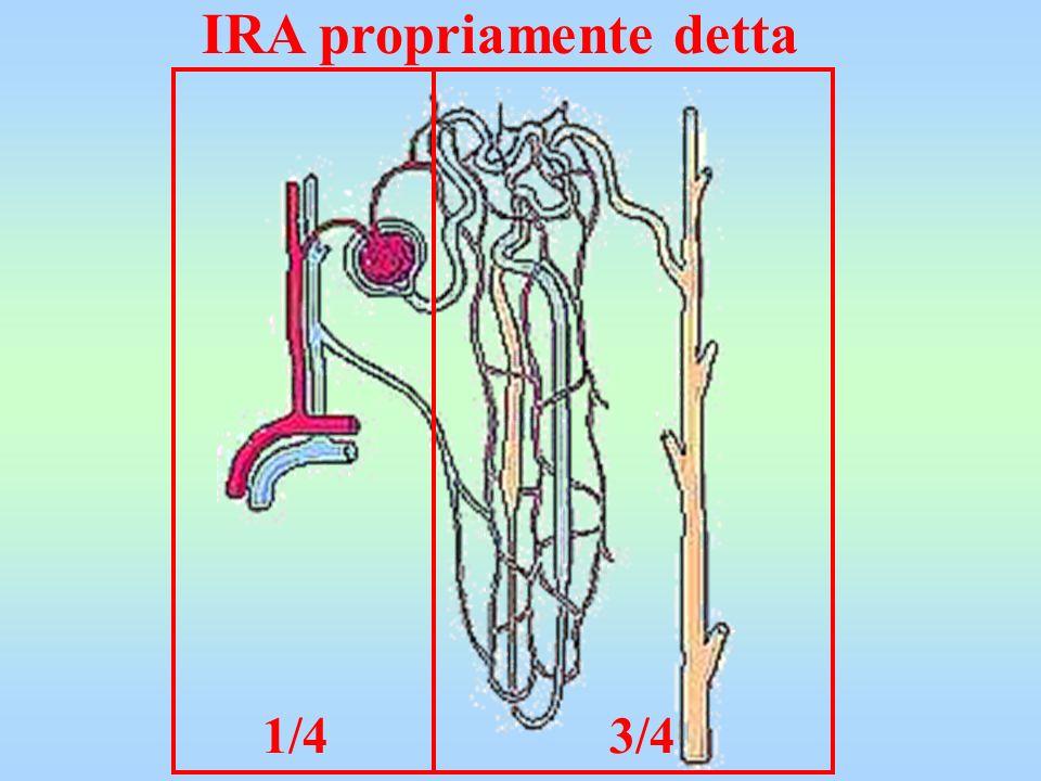 CRRT IRRT l Stabilità emodinamica l Rimozione di liquidi lenta, uniforme, completa l Efficacia dialitica bassa, tempi lunghi l Restrizione di volume minimo l Stabilità emodinamica l Rimozione di liquidi lenta, uniforme, completa l Efficacia dialitica bassa, tempi lunghi l Restrizione di volume minimo l Instabilità emodinamica l Rimozione di liquidi rapida, non uniforme, incompleta l Efficacia dialitica elevata, tempo breve l Restrizione di volume importante l Instabilità emodinamica l Rimozione di liquidi rapida, non uniforme, incompleta l Efficacia dialitica elevata, tempo breve l Restrizione di volume importante da: W.