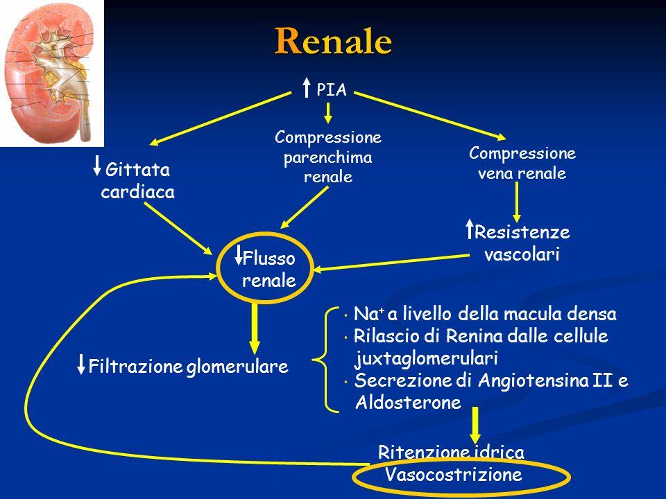 Renale PIA Gittata cardiaca Compressione parenchima renale Compressione vena renale Flusso renale Resistenze vascolari Filtrazione glomerulare Na + a