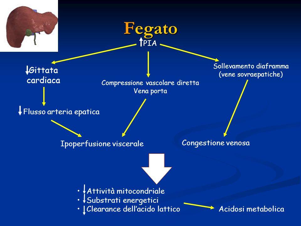 Fegato PIA Gittata cardiaca Flusso arteria epatica Compressione vascolare diretta Vena porta Sollevamento diaframma (vene sovraepatiche) Ipoperfusione