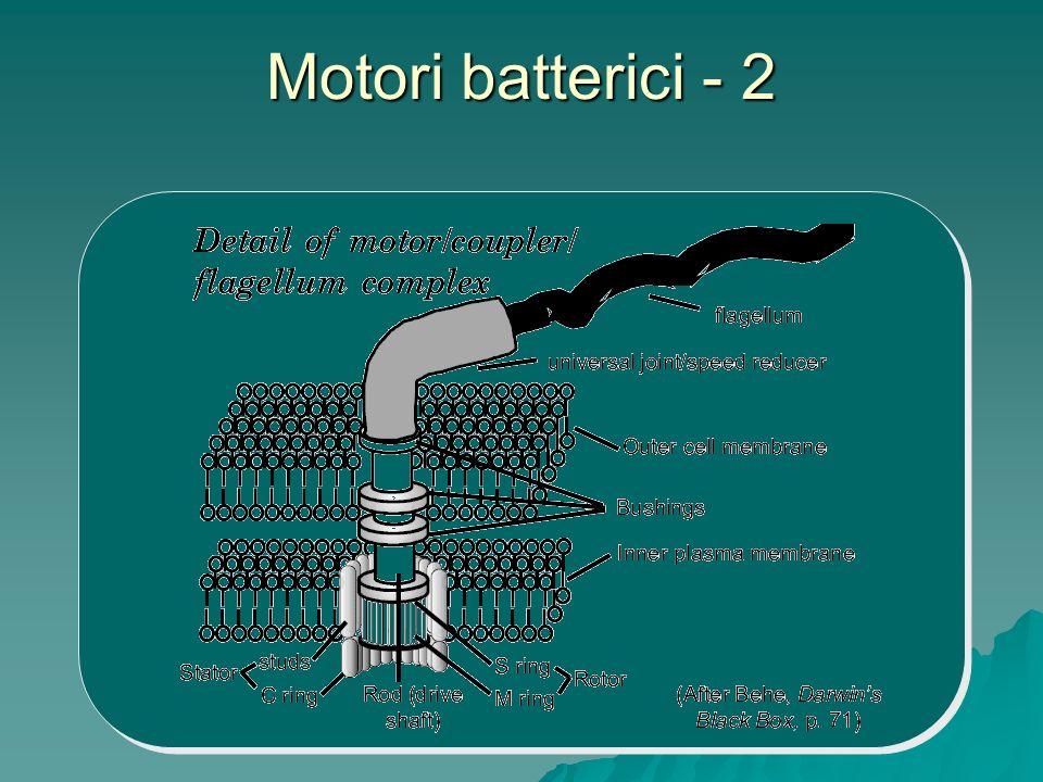 Motori batterici - 2