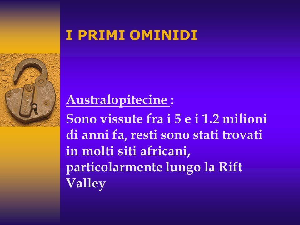 Australopitecine: 5-1,2 milioni di anni fa, solo in Africa (Australopithecus e Paranthropus) Homo habilis: 2,4-1,5 milioni di anni fa, cervello pi ù g