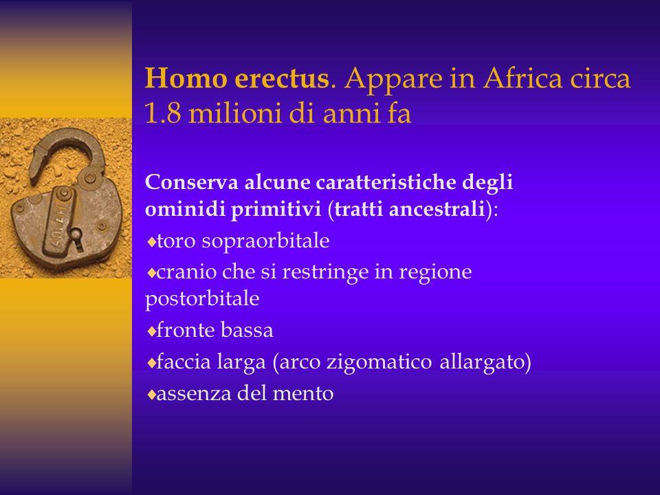 Esistono diverse ipotesi sull'origine di H. habilis : - Un'ipotesi sull'ominazione fa discendere H. habilis da A. africanus. - Secondo un'altra ipotes