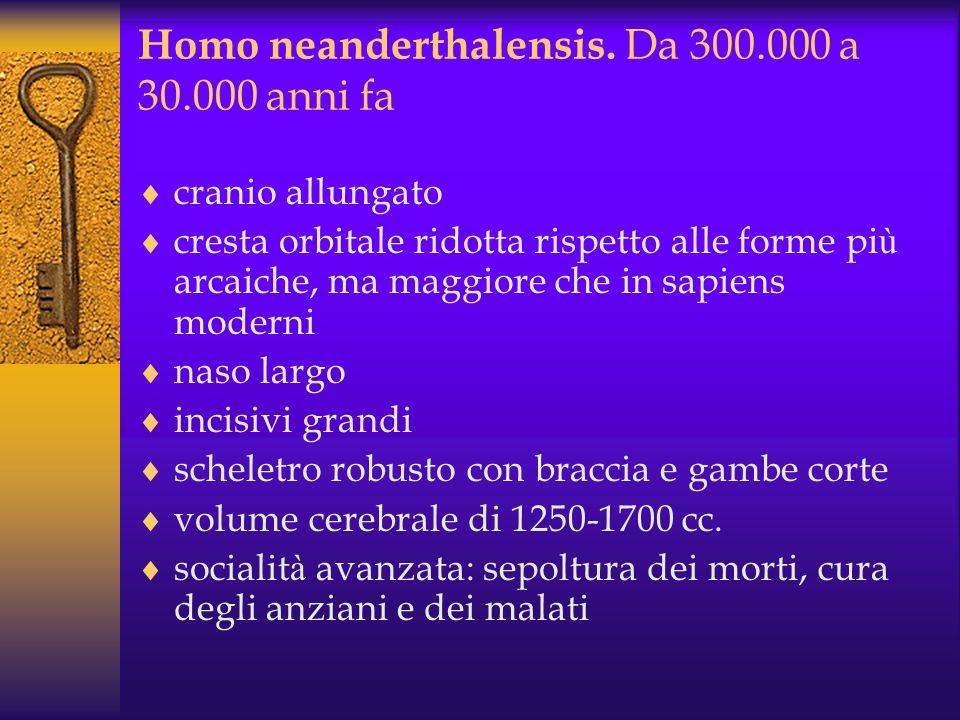 Homo heidelbergensis Tra gli 800.000 e 500.000 anni fa comparvero in Africa, Asia occidentale e Europa ominidi con cervelli pi ù grandi (1100-1400 cc)