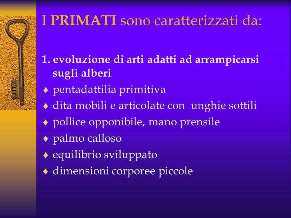 I PRIMATI sono caratterizzati da: 1.