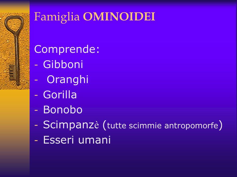 Famiglia OMINOIDEI Comprende: - Gibboni - Oranghi - Gorilla - Bonobo - Scimpanz è ( tutte scimmie antropomorfe ) - Esseri umani