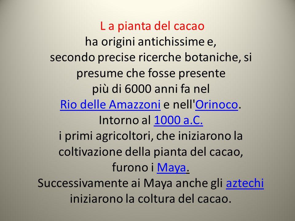 L a pianta del cacao ha origini antichissime e, secondo precise ricerche botaniche, si presume che fosse presente più di 6000 anni fa nel Rio delle Am