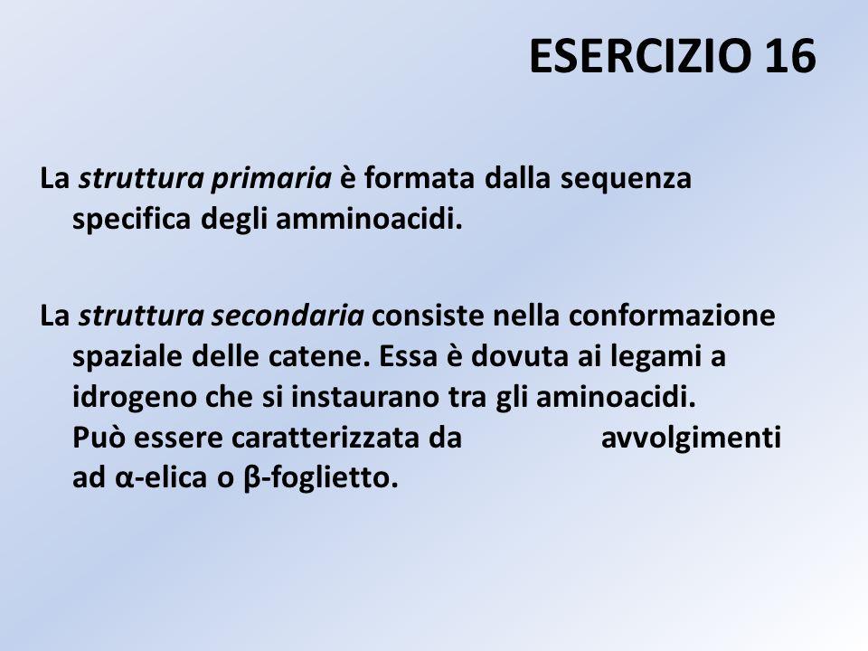 ESERCIZIO 16 La struttura primaria è formata dalla sequenza specifica degli amminoacidi. La struttura secondaria consiste nella conformazione spaziale