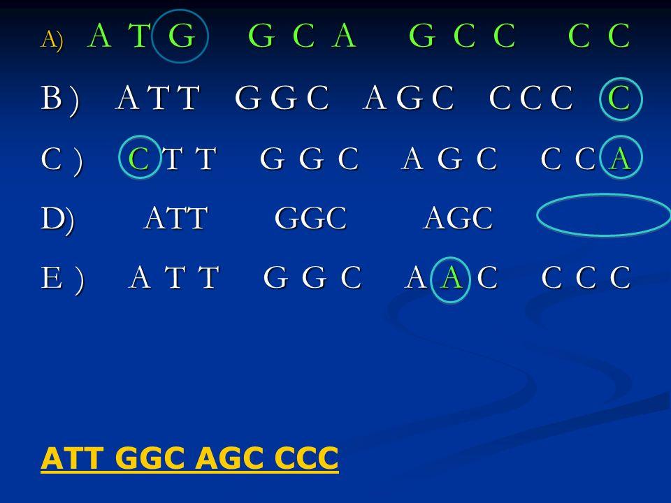 B) ATT GGC AGC CCC C C) CTT GGC AGC CCA D) ATT GGC AGC E) ATT GGC AAC CCC ATT GGC AGC CCC