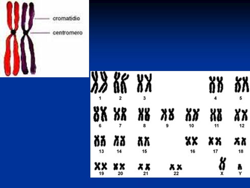 12.Nella sequenza di DNA ATT GGC AGC CCC avviene una mutazione.