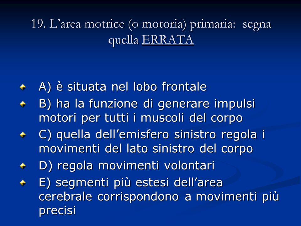 19. Larea motrice (o motoria) primaria: segna quella ERRATA A) è situata nel lobo frontale B) ha la funzione di generare impulsi motori per tutti i mu