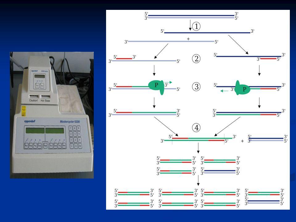13.Con il termine eredità poligenica si intende: A) Il caso in cui un gene influenza diversi caratteri B) La condizione nella quale vengono trasmessi durante la duplicazione una quantità maggiore di geni rispetto alla normalità C) L effetto sommativo di due o piu geni che determinano un unico carattere fenotipico D) La contemporanea presenza di due alleli dominanti in un eterozigote E) La grande varietà di informazioni contenute nel DNA E) La grande varietà di informazioni contenute nel DNA C) L effetto sommativo di due o piu geni che determinano un unico carattere fenotipico