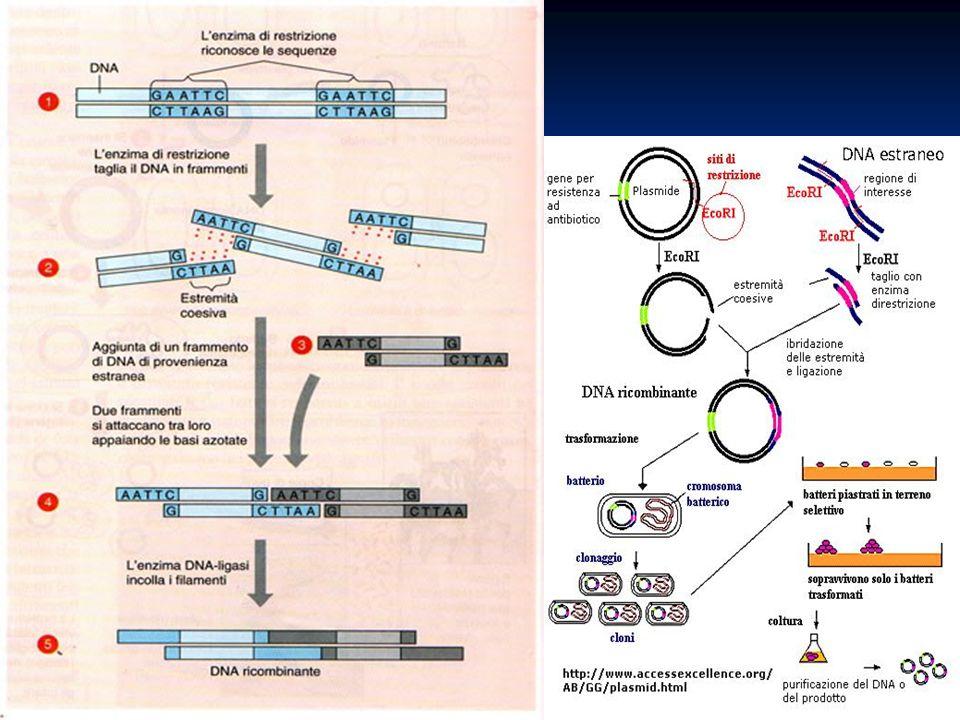4.Tutte le seguenti affermazioni riguardanti il codice genetico sono corrette tranne una, quale.