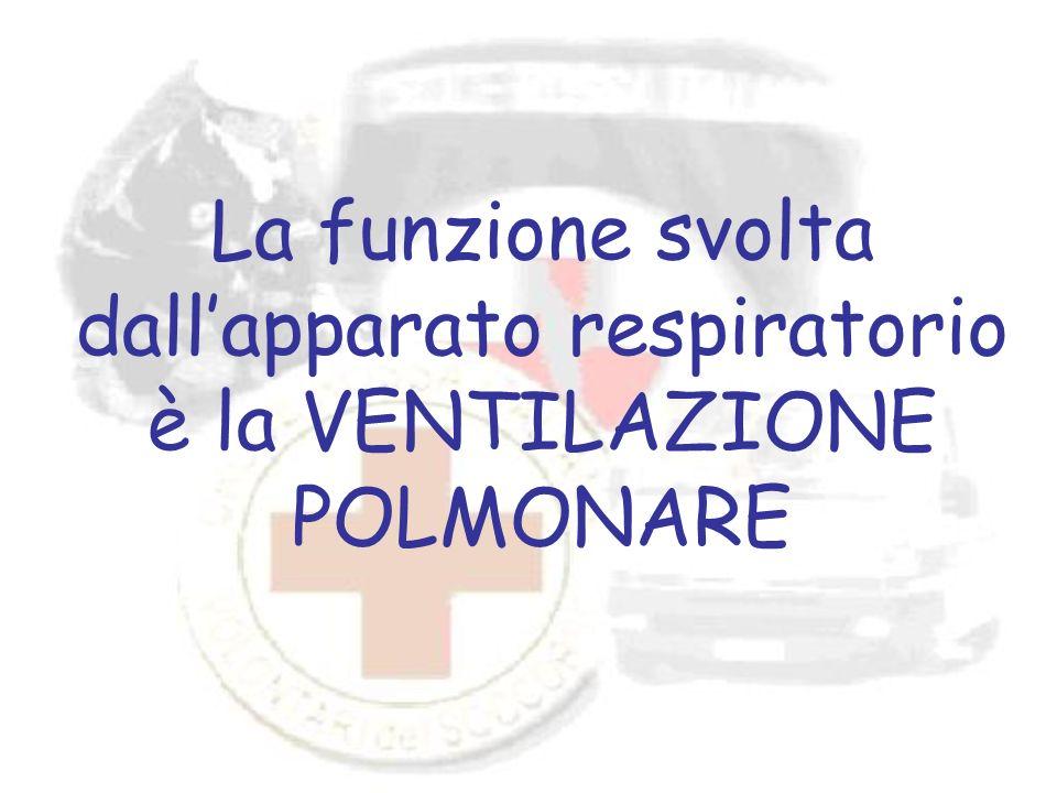 La funzione svolta dallapparato respiratorio è la VENTILAZIONE POLMONARE