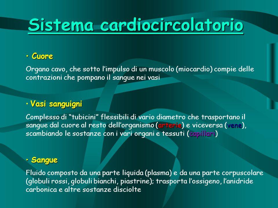 Sistema cardiocircolatorio Cuore Cuore Organo cavo, che sotto limpulso di un muscolo (miocardio) compie delle contrazioni che pompano il sangue nei vasi Vasi sanguigni arterievene capillari Complesso di tubicini flessibili di vario diametro che trasportano il sangue dal cuore al resto dellorganismo (arterie) e viceversa (vene), scambiando le sostanze con i vari organi e tessuti (capillari) Sangue Sangue Fluido composto da una parte liquida (plasma) e da una parte corpuscolare (globuli rossi, globuli bianchi, piastrine); trasporta lossigeno, lanidride carbonica e altre sostanze disciolte