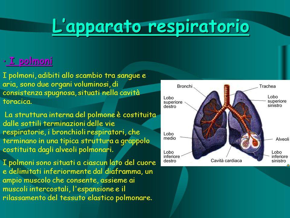 I polmoni I polmoni I polmoni, adibiti allo scambio tra sangue e aria, sono due organi voluminosi, di consistenza spugnosa, situati nella cavità toracica.