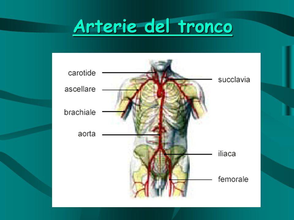 Arterie dellarto superiore ed inferiore