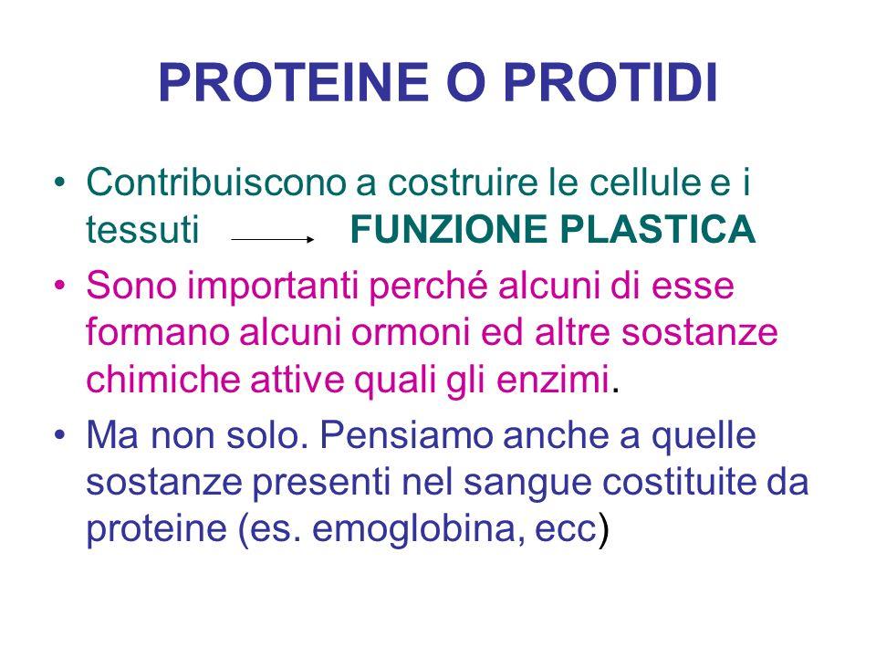 PROTEINE O PROTIDI Contribuiscono a costruire le cellule e i tessuti FUNZIONE PLASTICA Sono importanti perché alcuni di esse formano alcuni ormoni ed