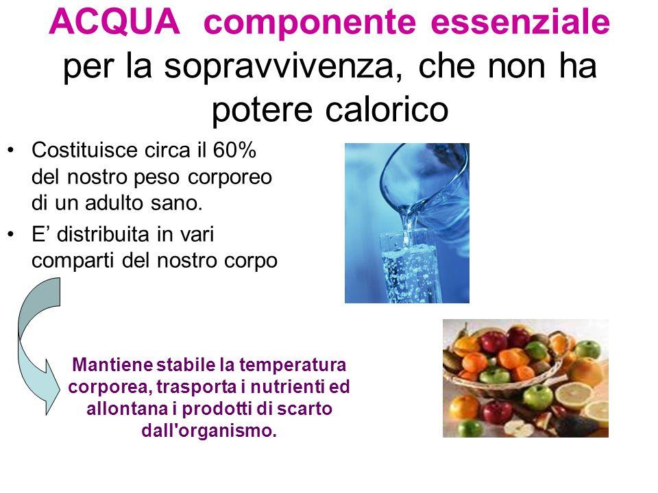 ACQUA componente essenziale per la sopravvivenza, che non ha potere calorico Costituisce circa il 60% del nostro peso corporeo di un adulto sano. E di