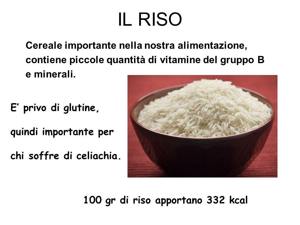 IL RISO Cereale importante nella nostra alimentazione, contiene piccole quantità di vitamine del gruppo B e minerali. 100 gr di riso apportano 332 kca