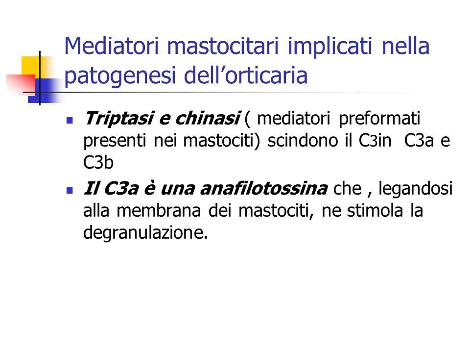 Mediatori mastocitari implicati nella patogenesi dellorticaria Triptasi e chinasi ( mediatori preformati presenti nei mastociti) scindono il C 3 in C3a e C3b Il C3a è una anafilotossina che, legandosi alla membrana dei mastociti, ne stimola la degranulazione.
