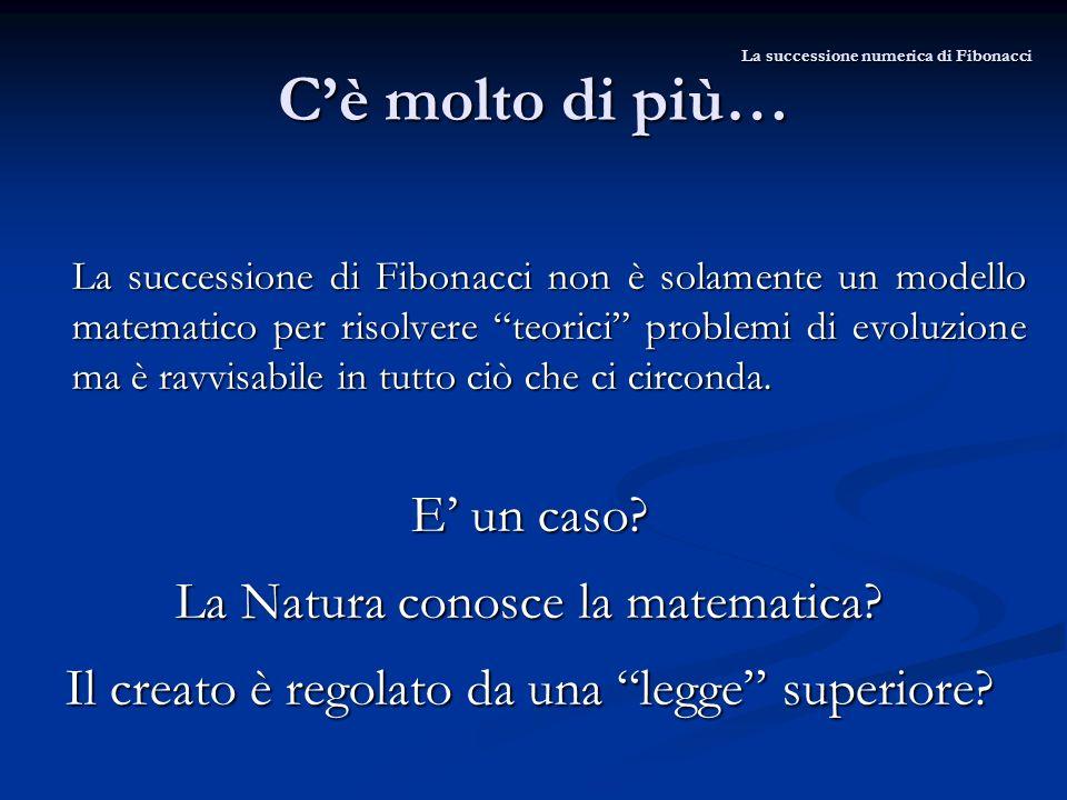Cè molto di più… La successione di Fibonacci non è solamente un modello matematico per risolvere teorici problemi di evoluzione ma è ravvisabile in tu
