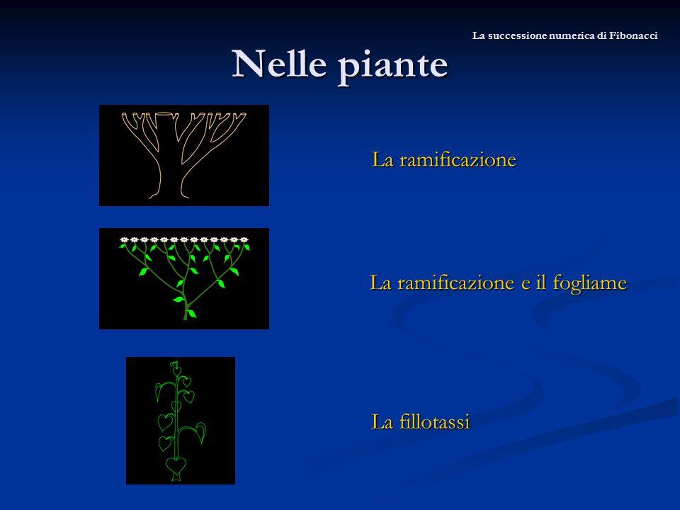 Nelle piante La successione numerica di Fibonacci La ramificazione La ramificazione e il fogliame La fillotassi