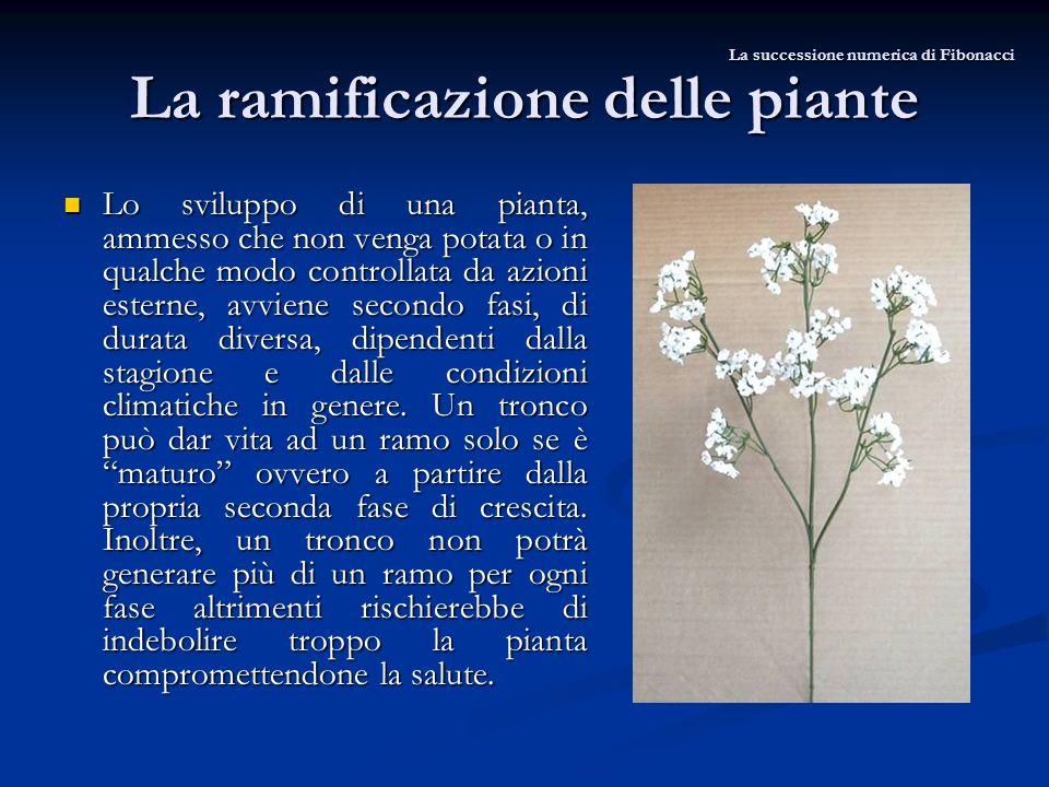 La ramificazione delle piante Lo sviluppo di una pianta, ammesso che non venga potata o in qualche modo controllata da azioni esterne, avviene secondo