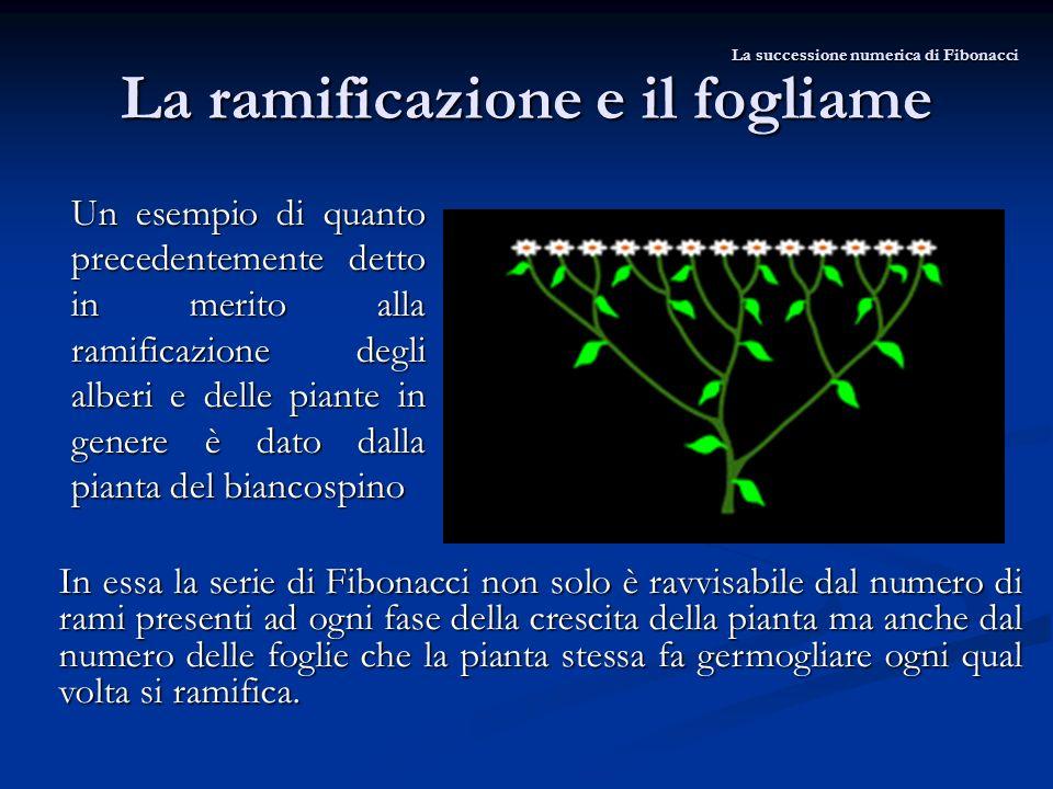 La ramificazione e il fogliame Un esempio di quanto precedentemente detto in merito alla ramificazione degli alberi e delle piante in genere è dato da