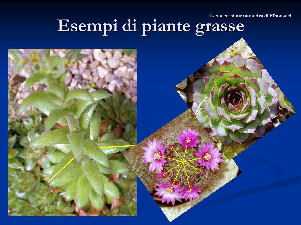 Esempi di piante grasse La successione numerica di Fibonacci
