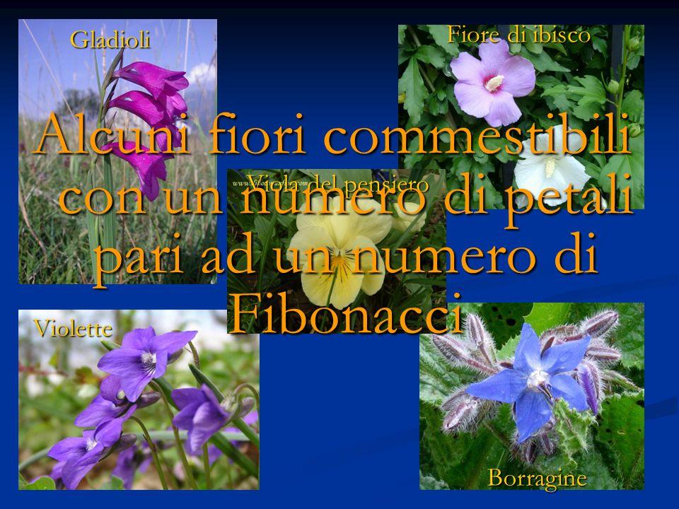 Fiore di ibisco Gladioli Violette Borragine Viola del pensiero Alcuni fiori commestibili con un numero di petali pari ad un numero di Fibonacci
